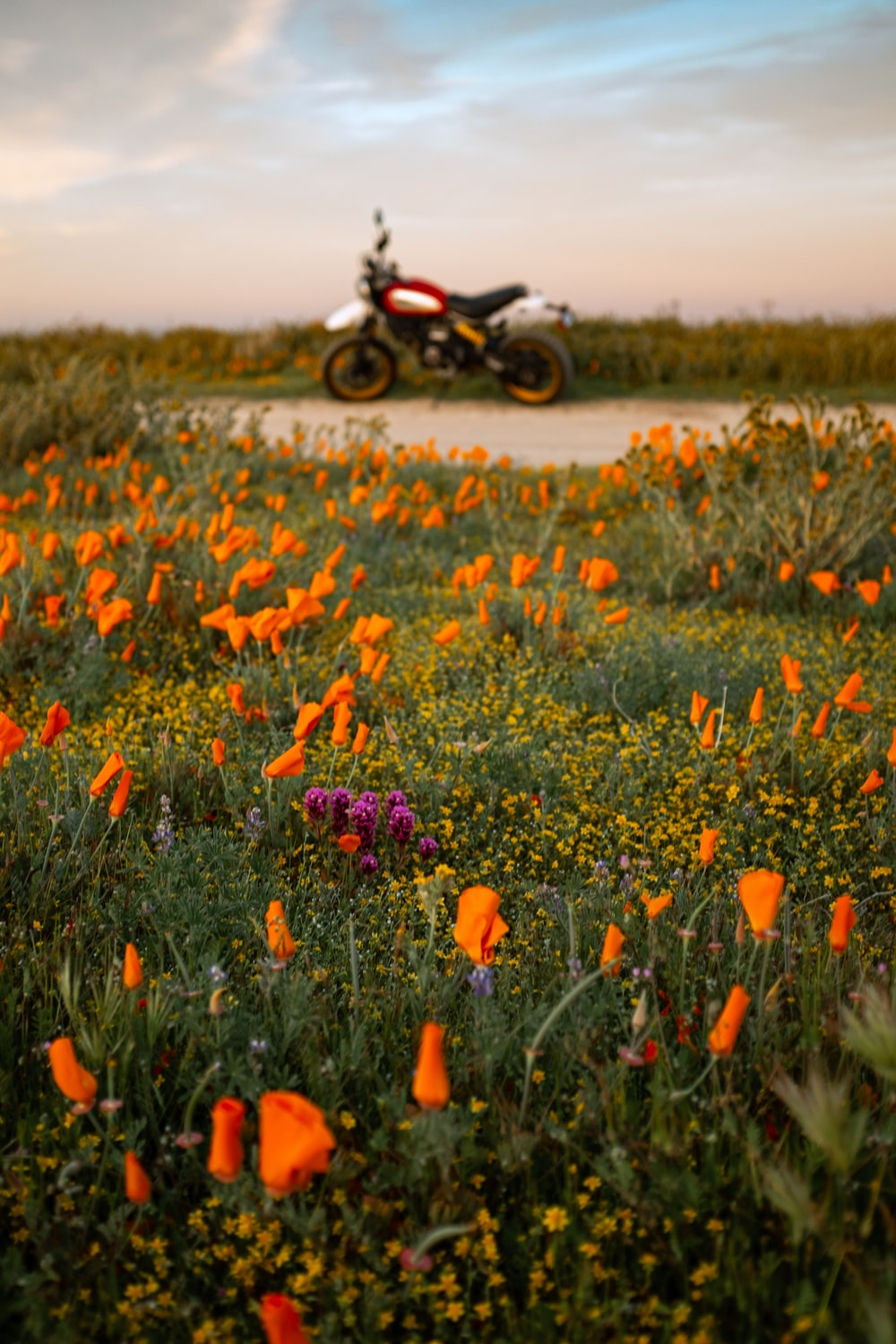 black motorcycle parked on flower field during daytime