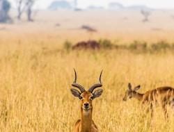Kampala - Ziwa Rhino Sanctuary - Murchison Falls National Park