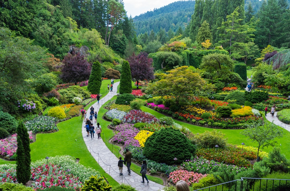 people walking on pathway surrounded by green trees during daytime
