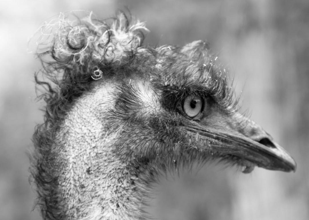 Emu of the Ozarks