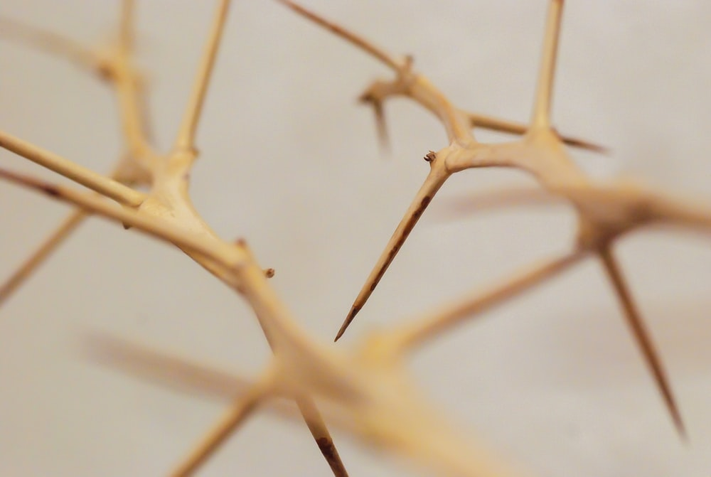 brown tree branch in close up photography