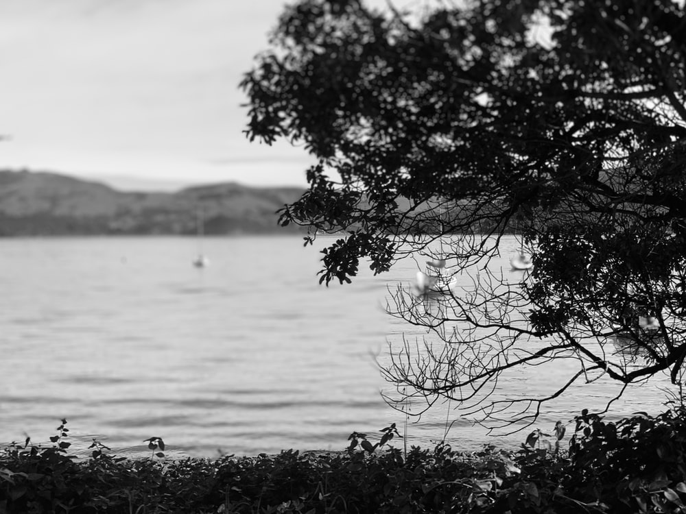 grayscale photo of tree near body of water