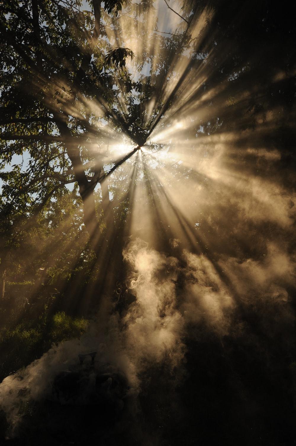sun rays coming through trees