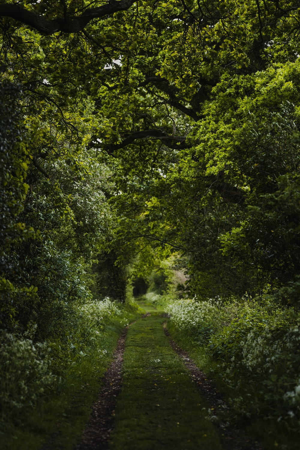 pathway between green trees during daytime