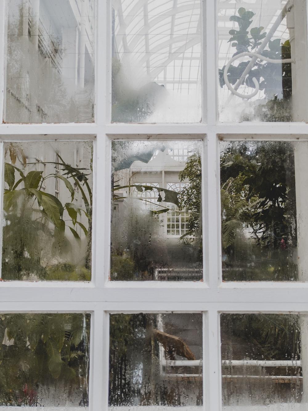 green leaf plant near white wooden framed glass window