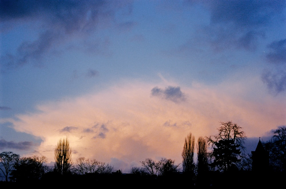 silhouette of trees under cloudy sky during daytime