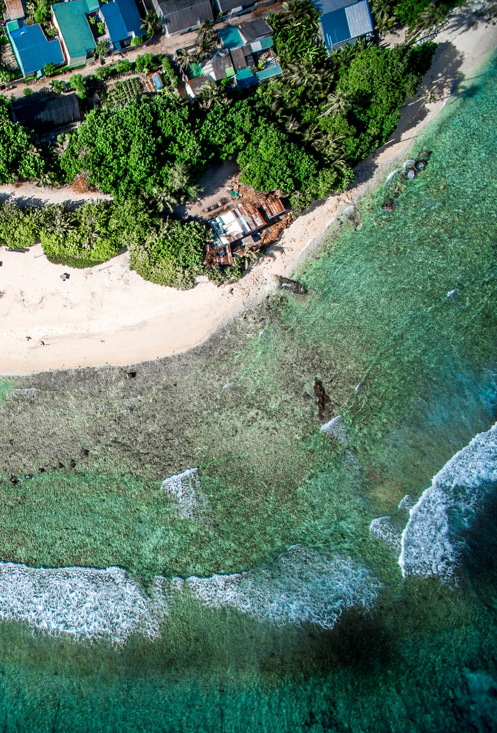 aerial view of green trees and brown sand during daytime