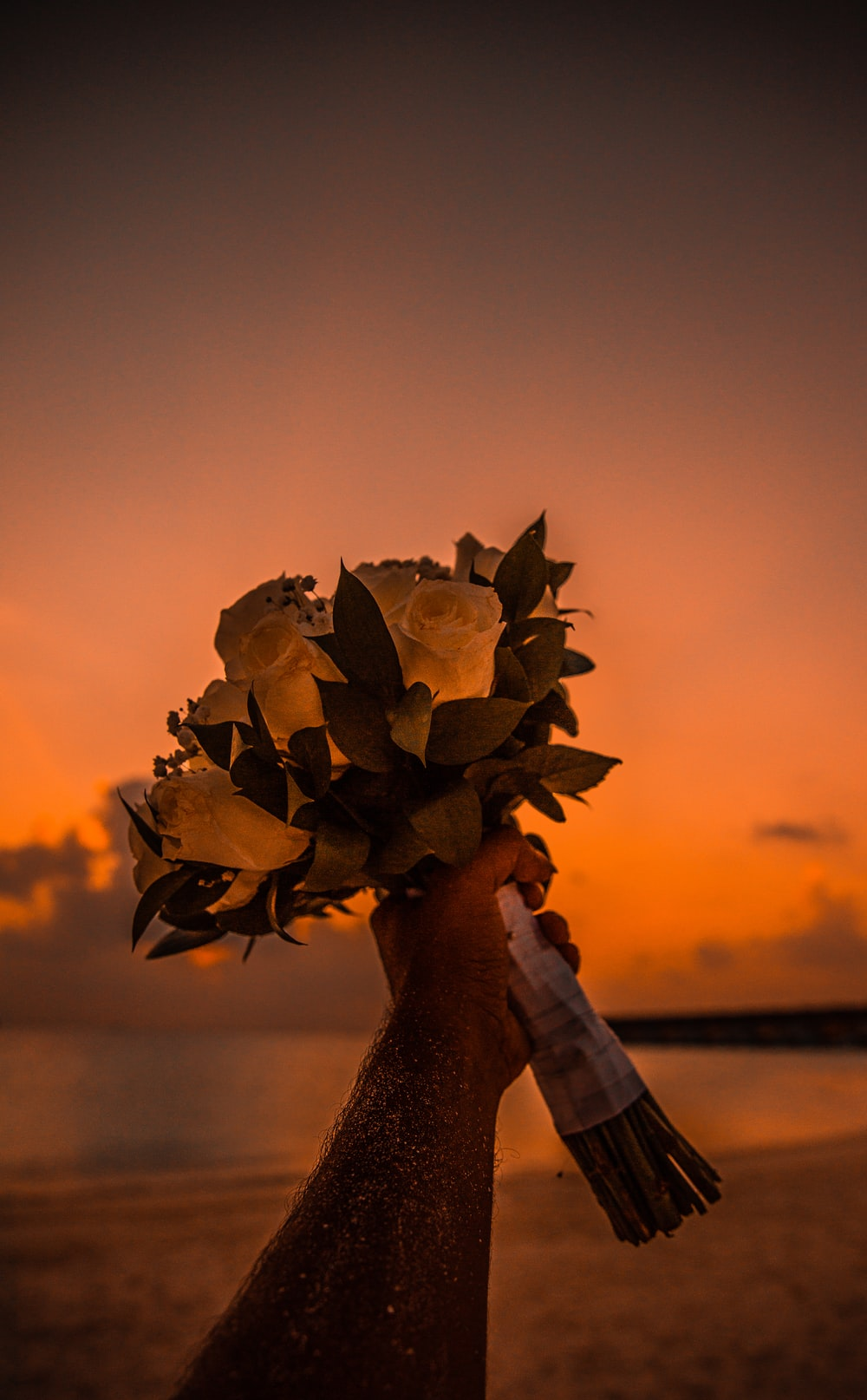 person holding brown flower during sunset