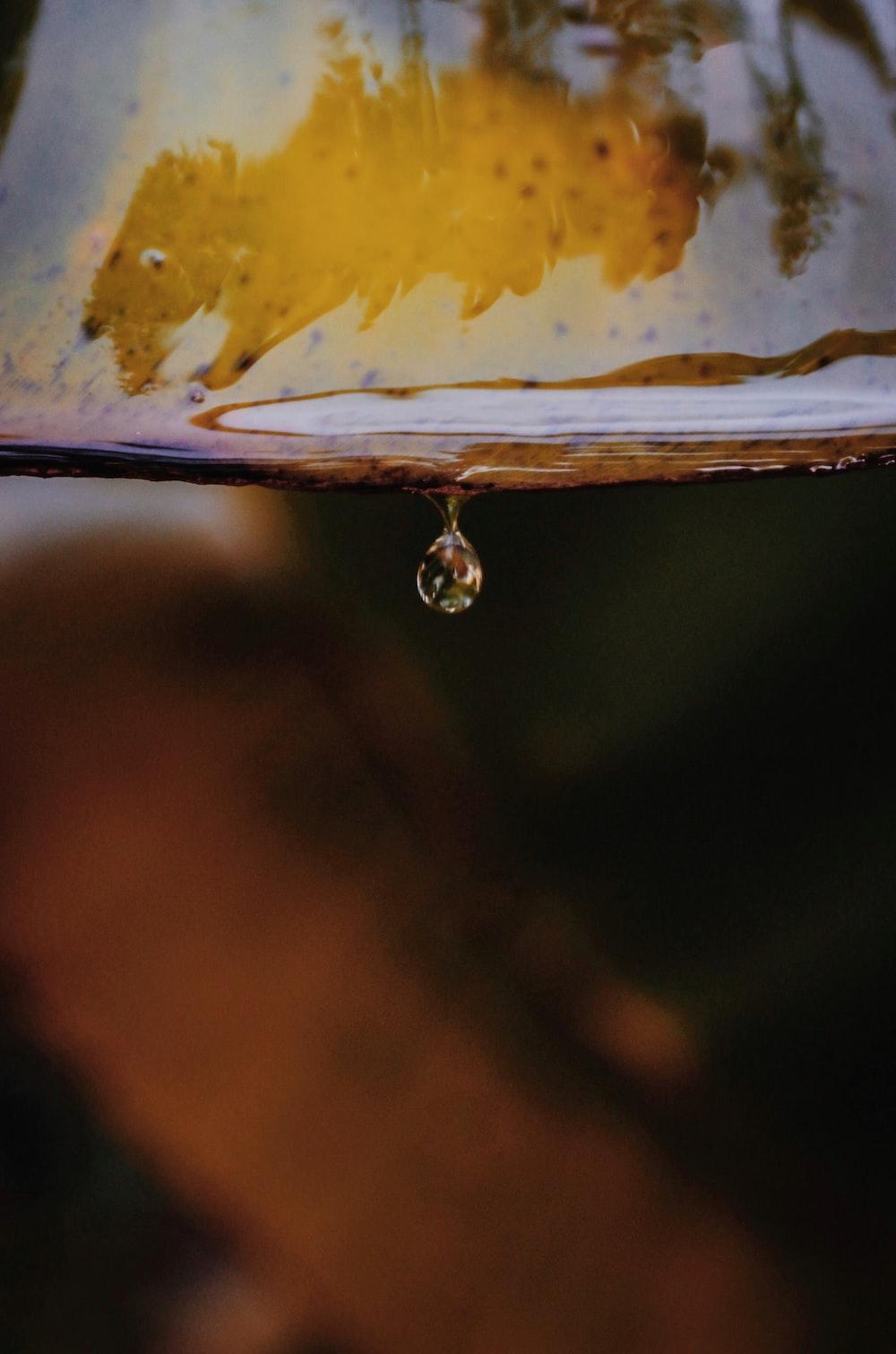 water drop on brown leaf