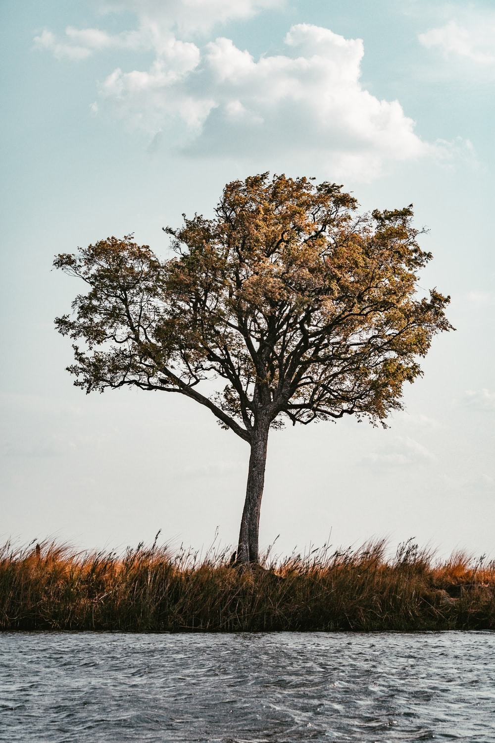 brown tree on brown grass field during daytime
