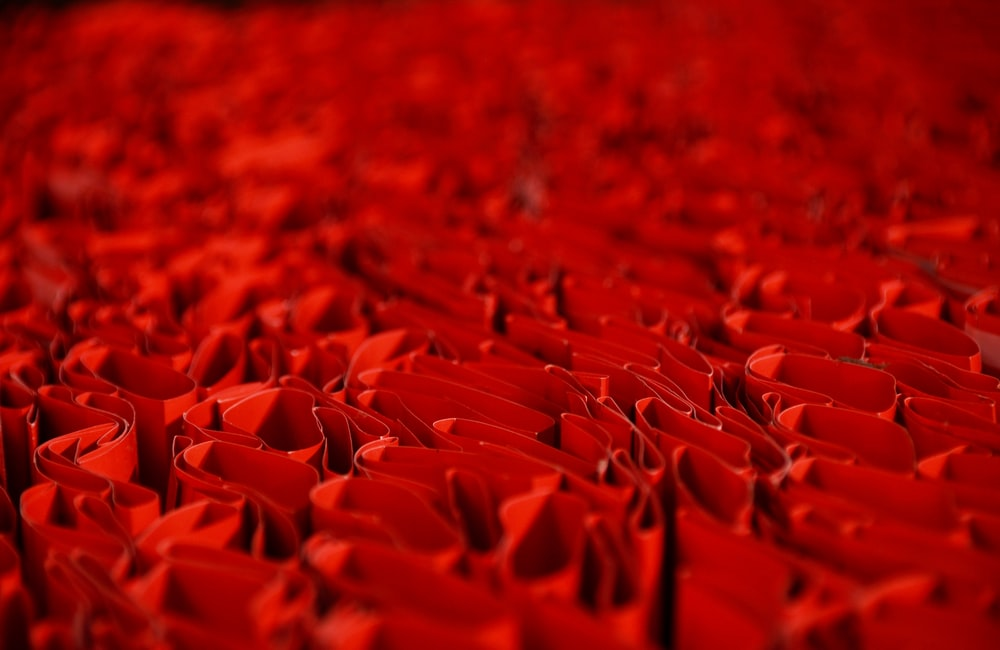 red petals in close up photography