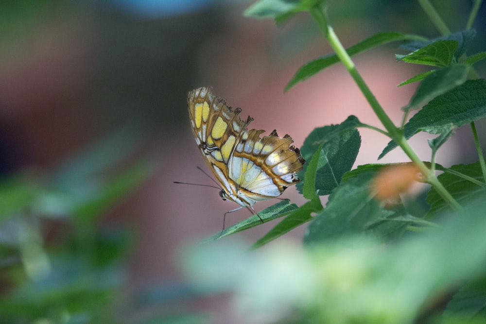 yellow and black butterfly on green leaf during daytime
