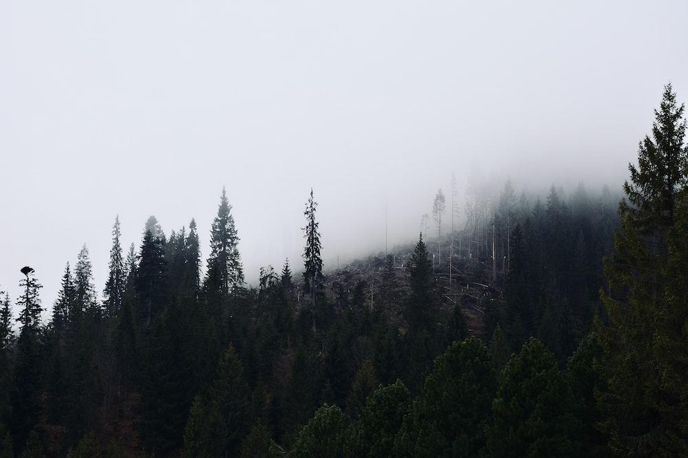 green pine trees under white sky during daytime