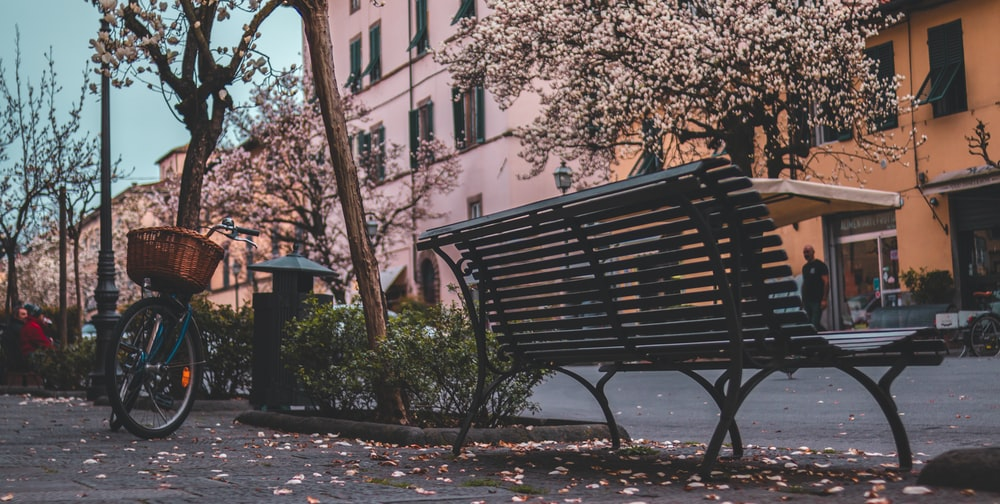 black metal bench near brown tree during daytime