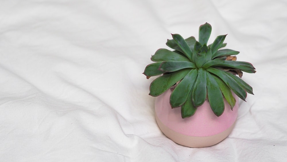 green succulent plant on white ceramic pot