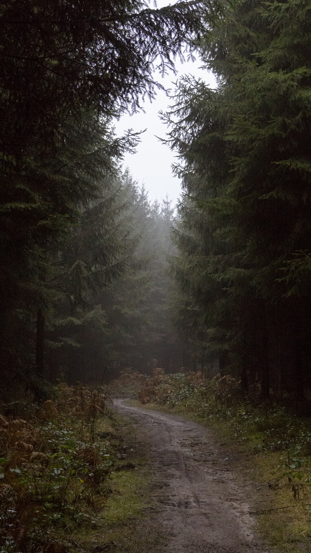 gray road in between green trees during daytime