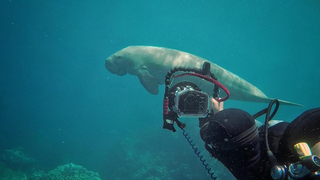 Filming a Dagong (Sea Cow) near El Quesir, Egypt in the Red Sea