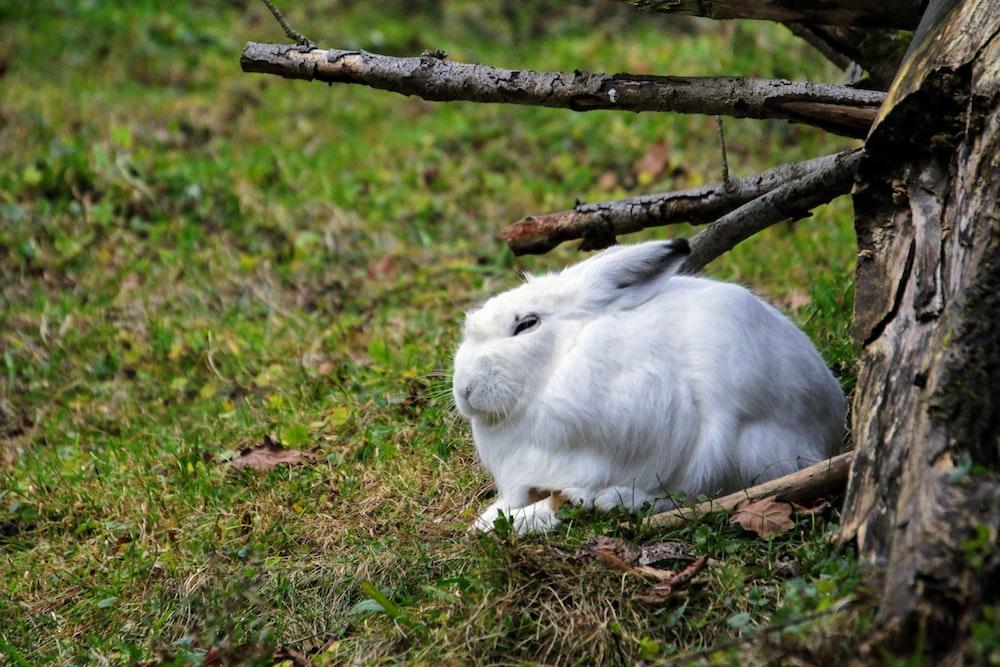 white rabbit on brown grass during daytime