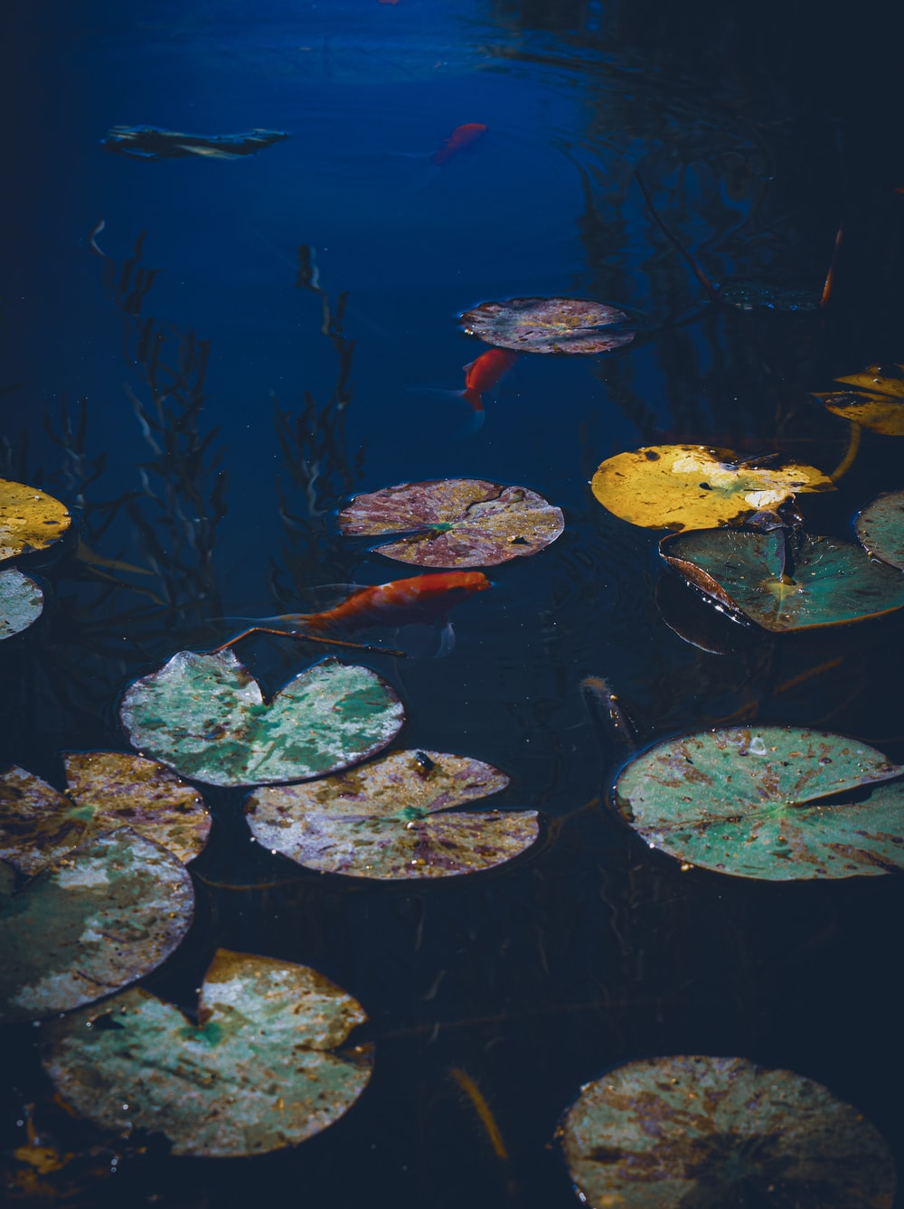green and yellow leaves on water