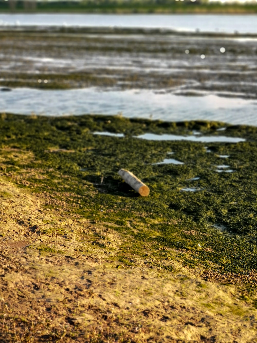 clear glass bottle on brown sand near body of water during daytime