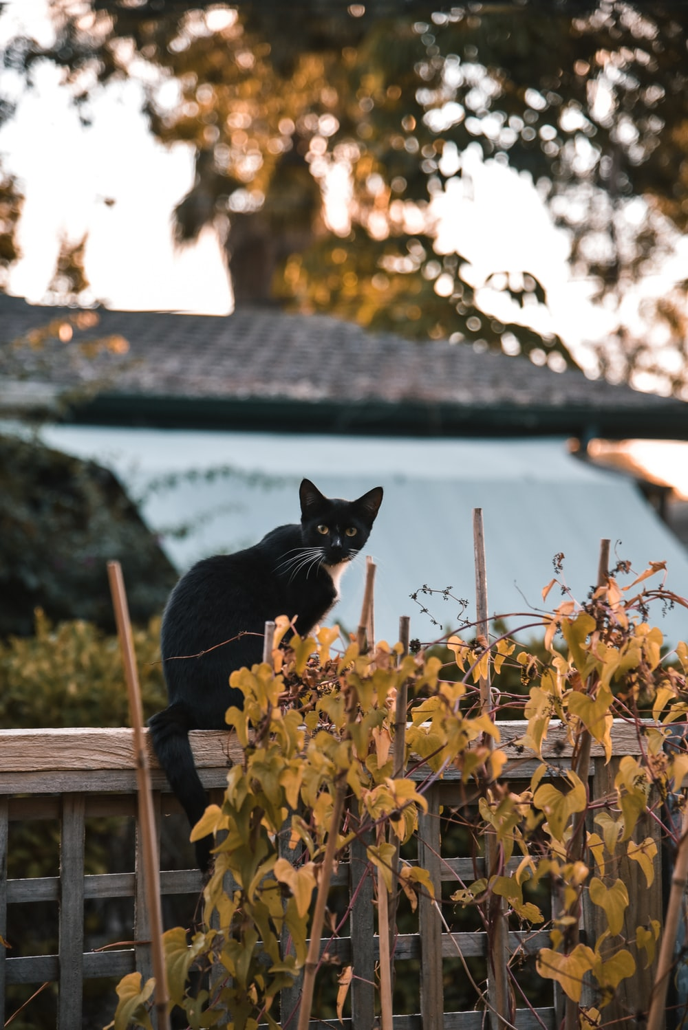 black cat on brown wooden fence
