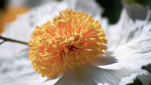 orange and white flower in macro shot