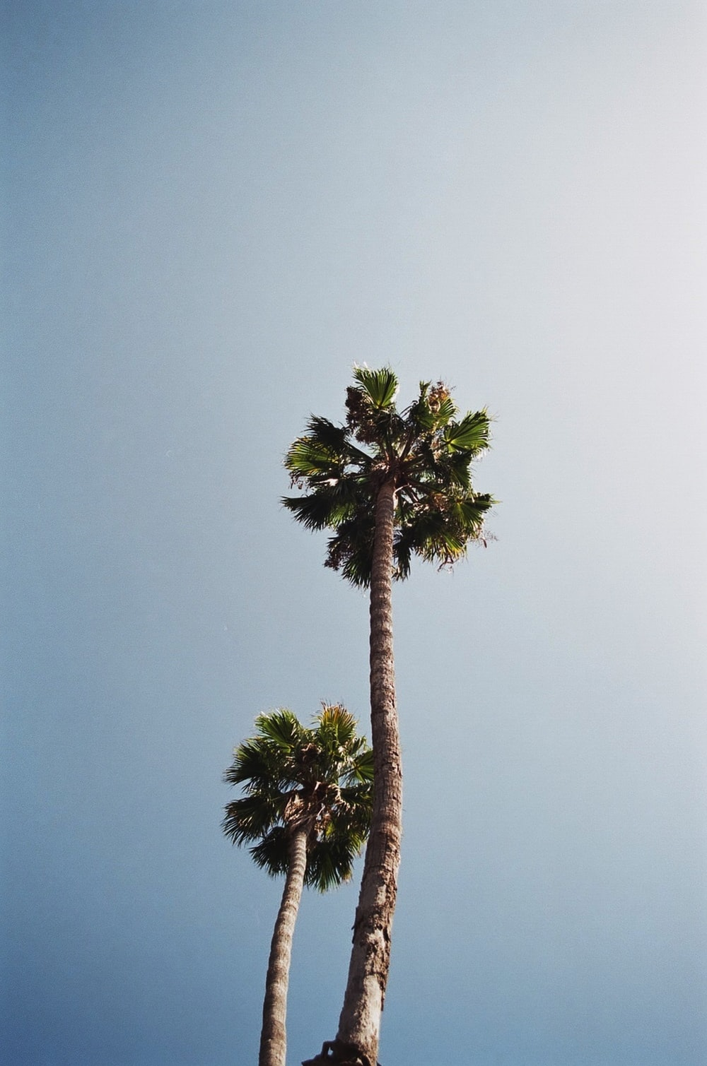 green palm tree under gray sky