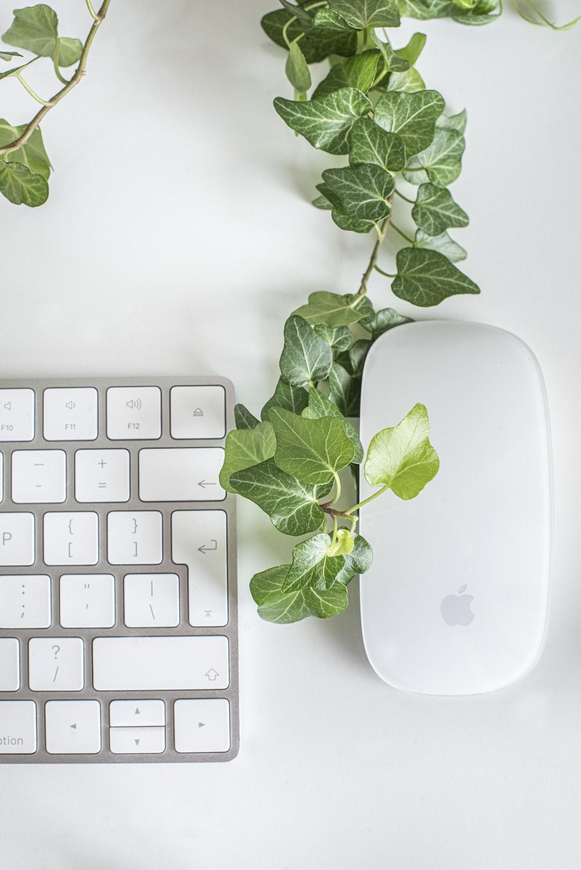 white apple magic mouse beside green leaves