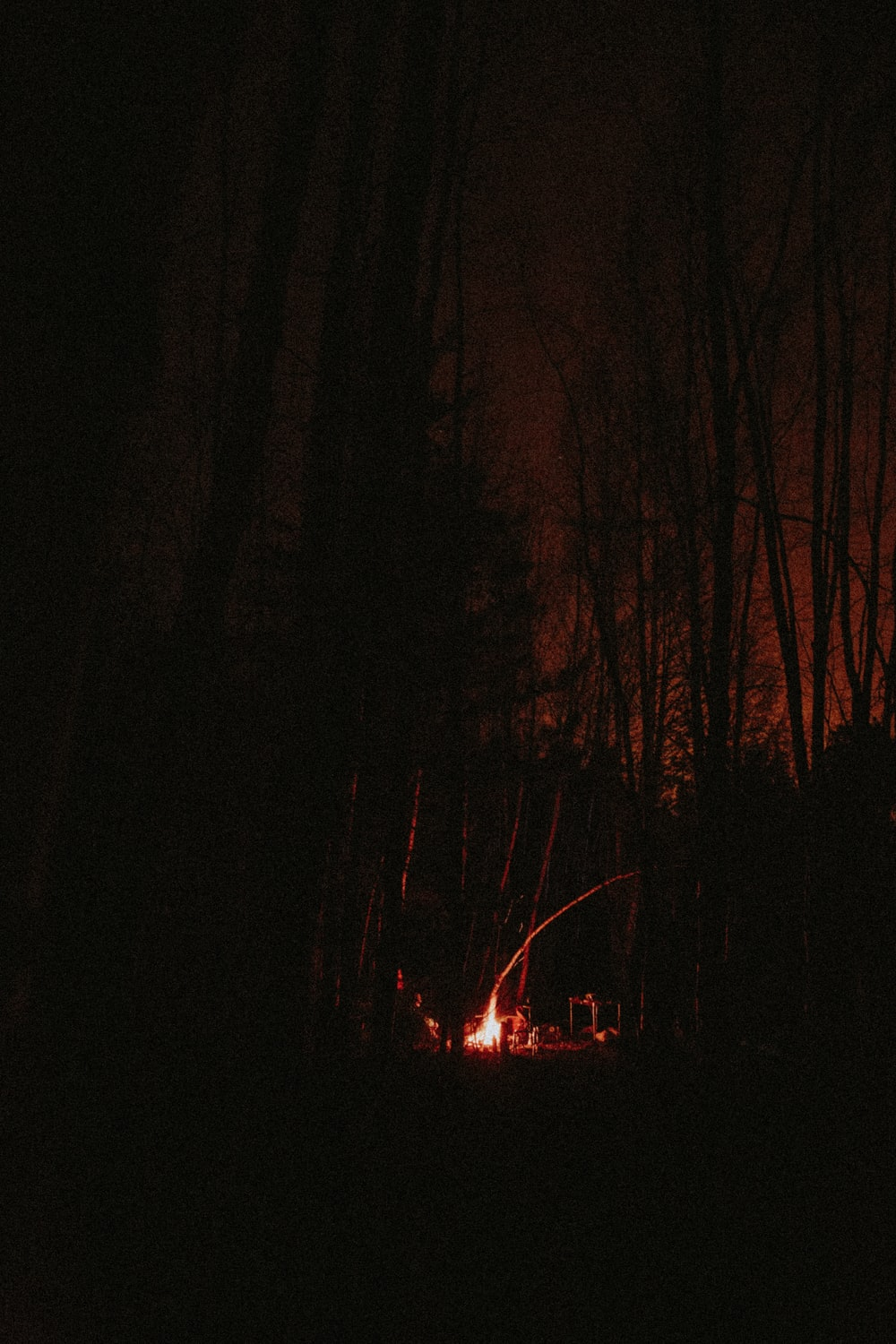 red and yellow fire in forest during night time