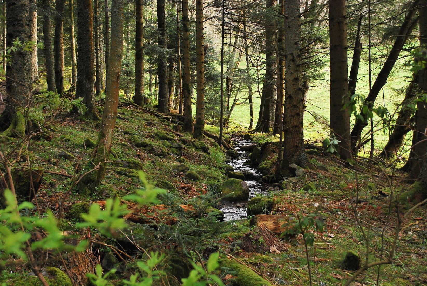 Abflussbildung im Wald - ein Teil des Wasserkreilaufes