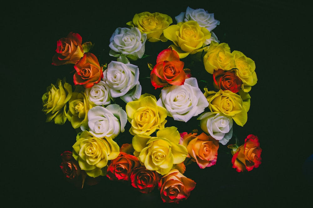 white red and green roses
