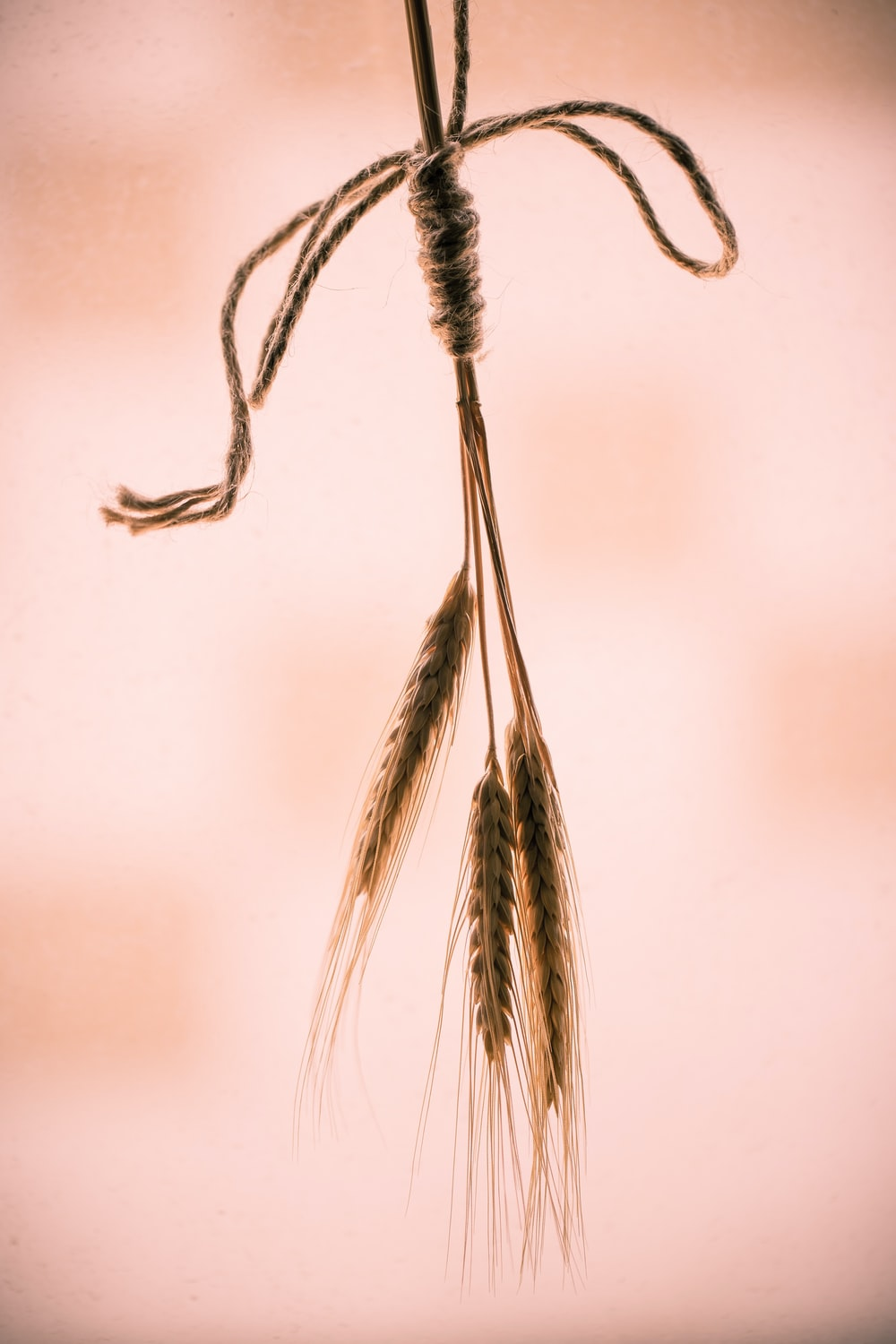 brown and white feather in close up photography