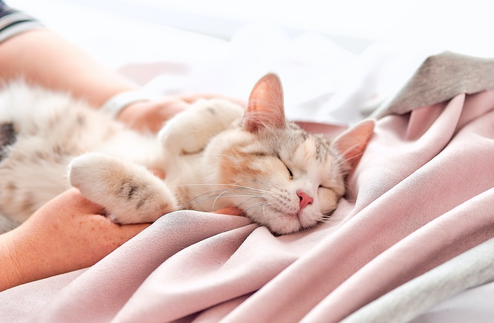 orange tabby cat lying on pink textile