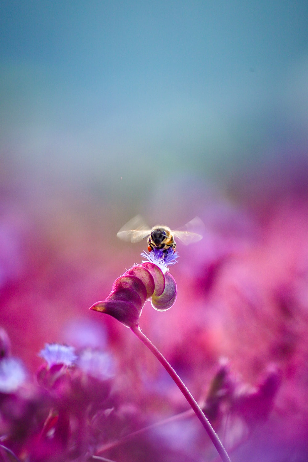 yellow and black bee on pink flower
