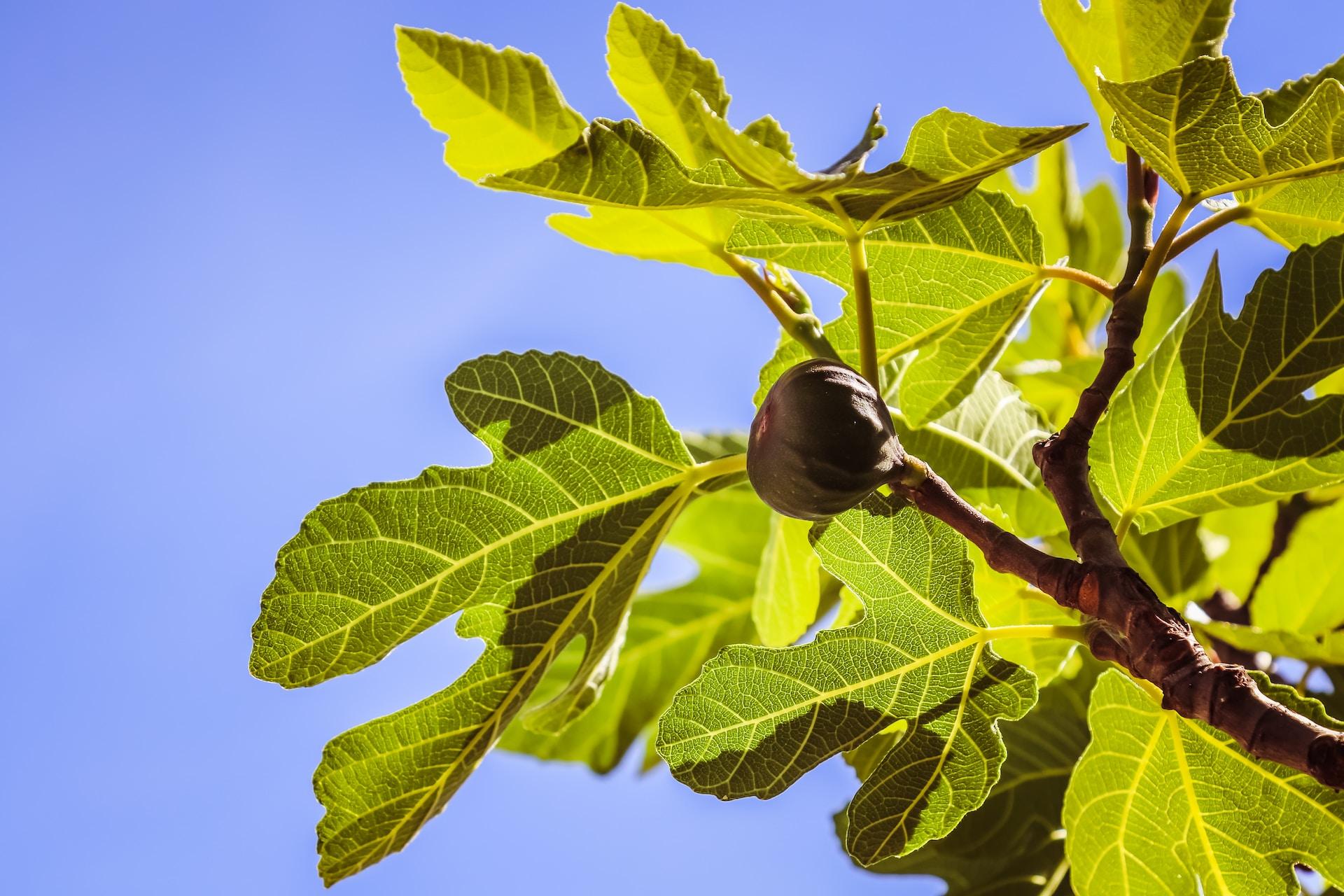 green leaf plant during daytime