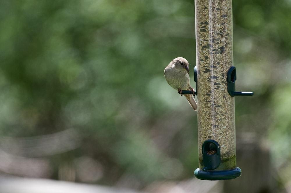 brown bird on green metal stand