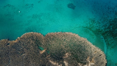 green and brown coral reef north macedonia zoom background