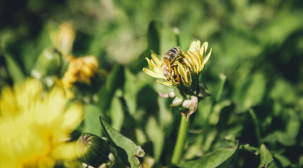 yellow and black bee on green flower