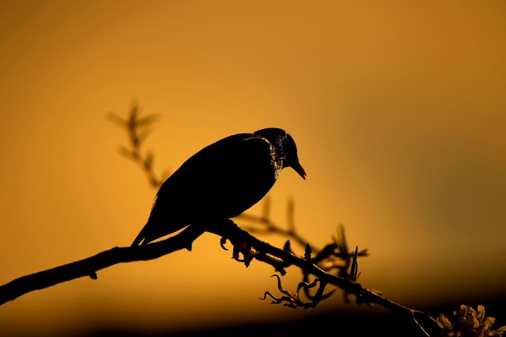 black bird perched on tree branch
