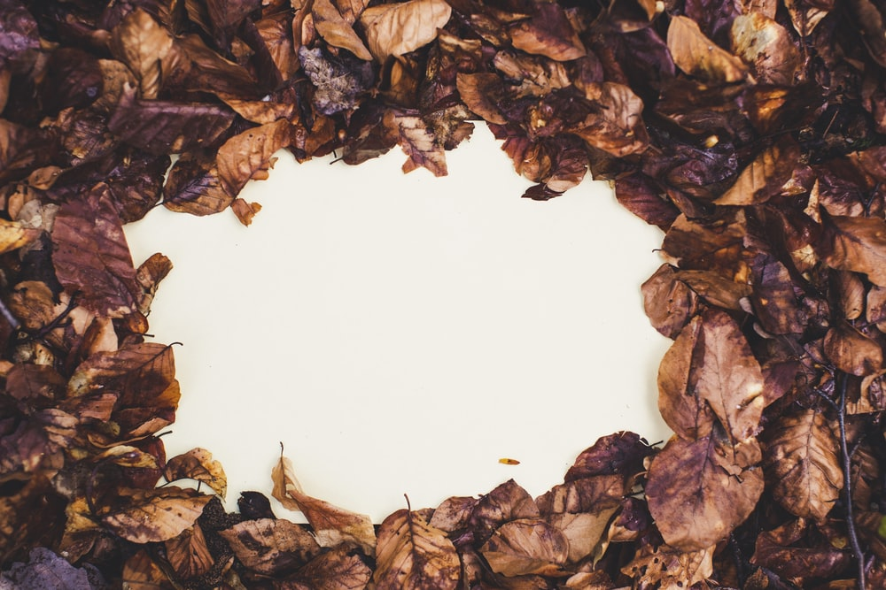 brown leaves on white round plate