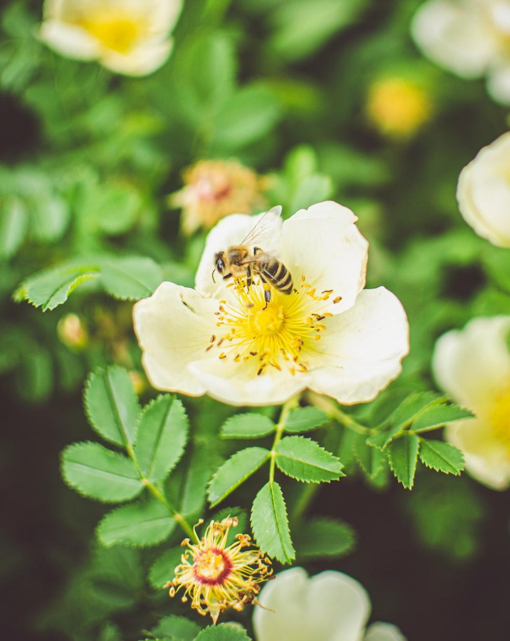white flower with yellow stigma