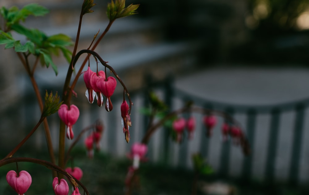 pink and yellow flowers in tilt shift lens