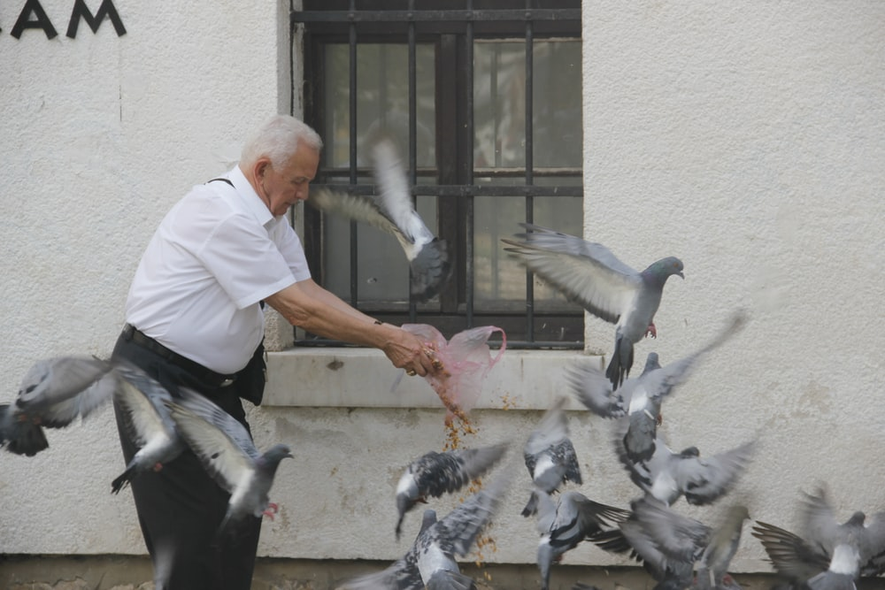 man in white shirt and black pants holding gray pigeon