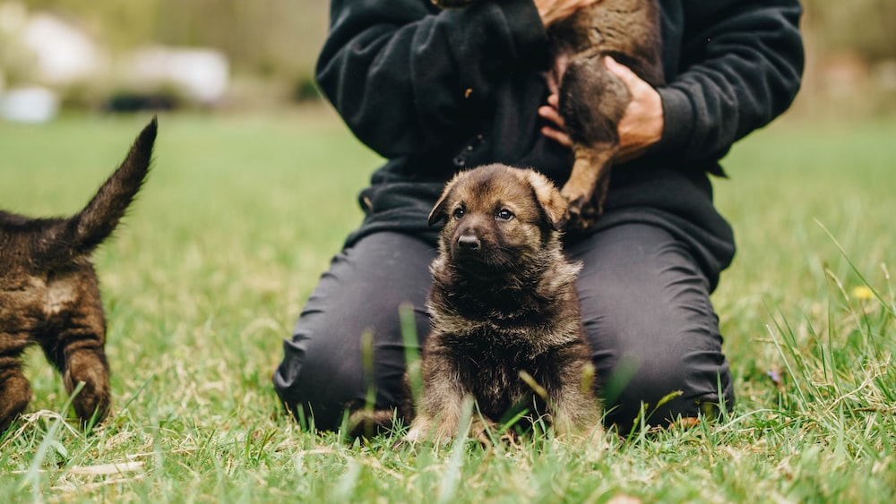 person in black leather jacket holding brown and black short coated puppy