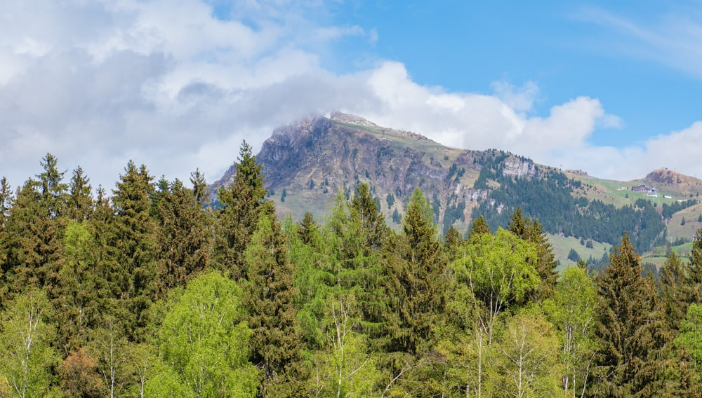 green trees near mountain under blue sky during daytime