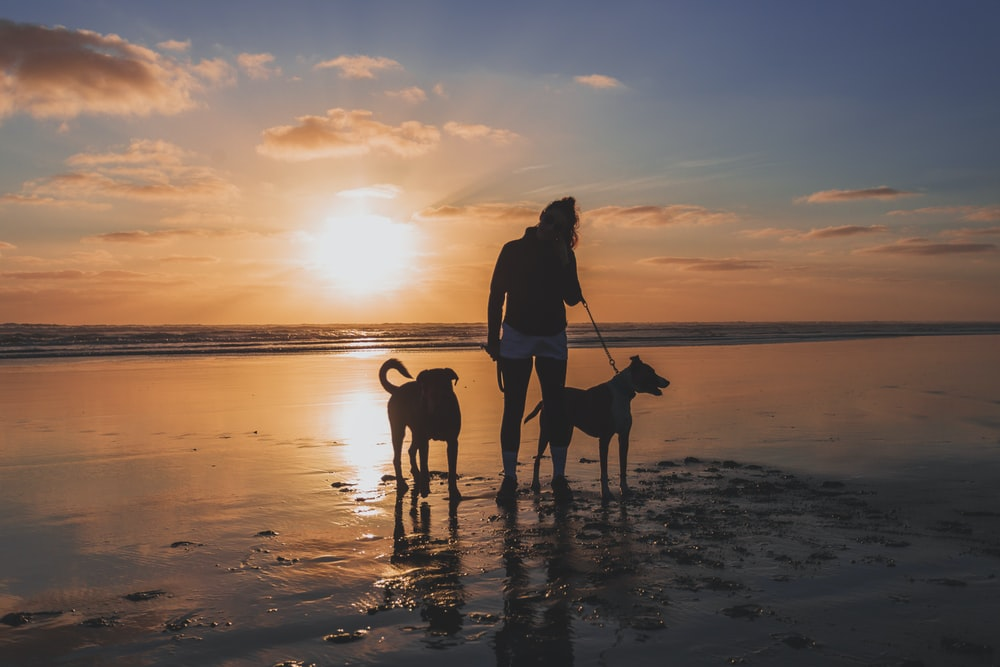 woman in black jacket and brown dog on beach during sunset