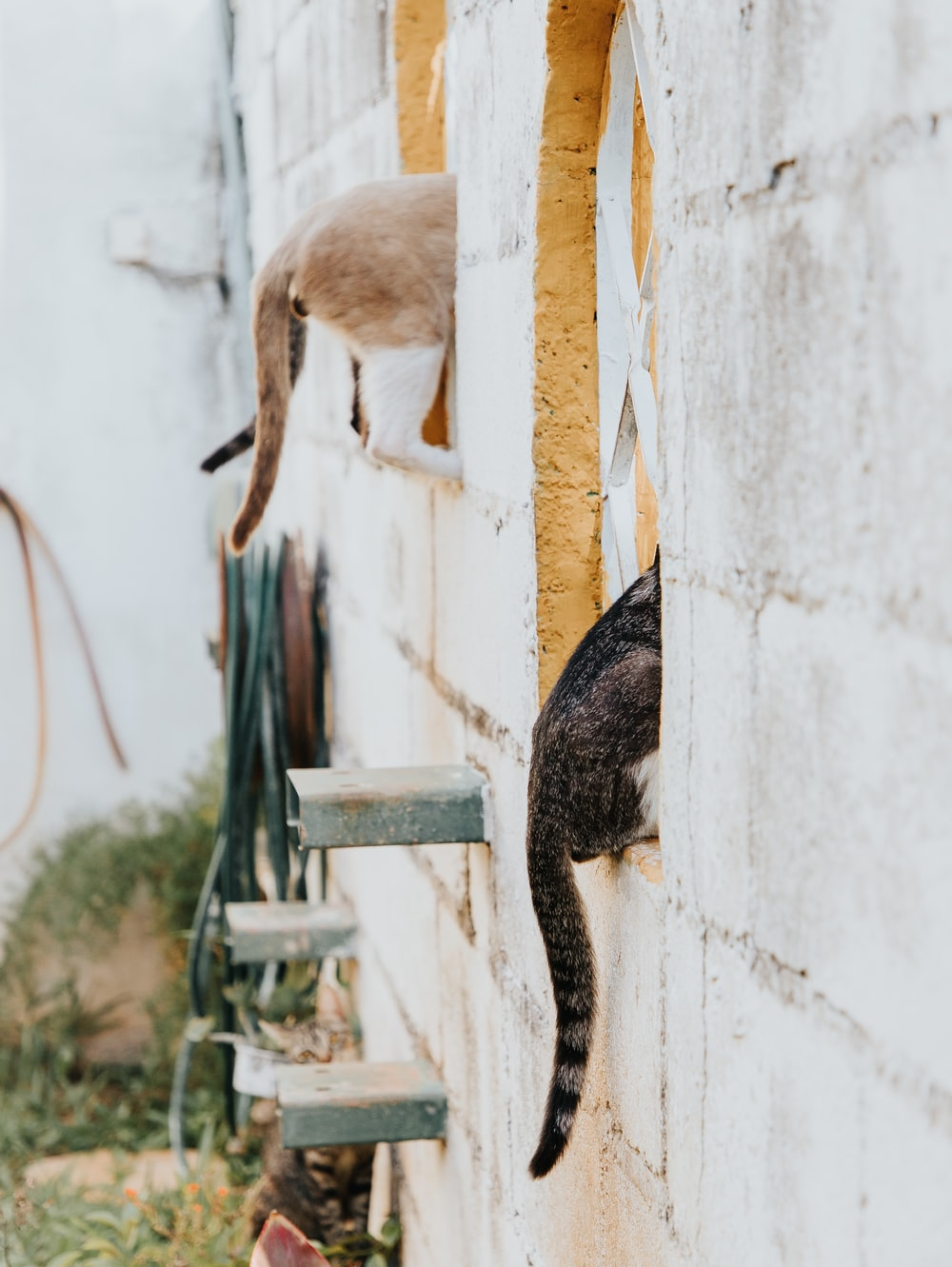 brown and black cat on white wooden fence during daytime