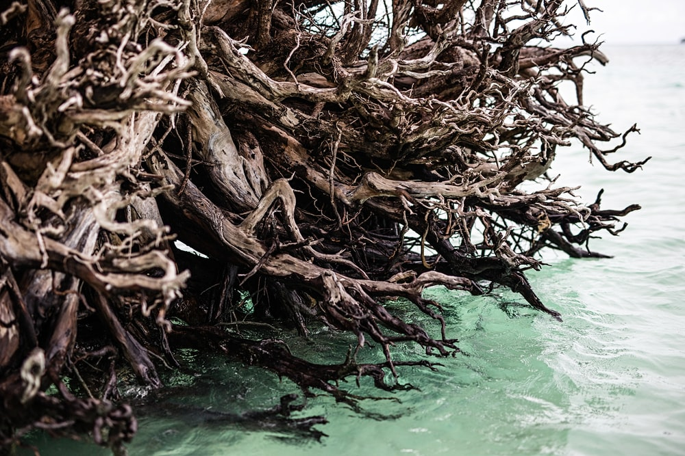 brown tree branches on water