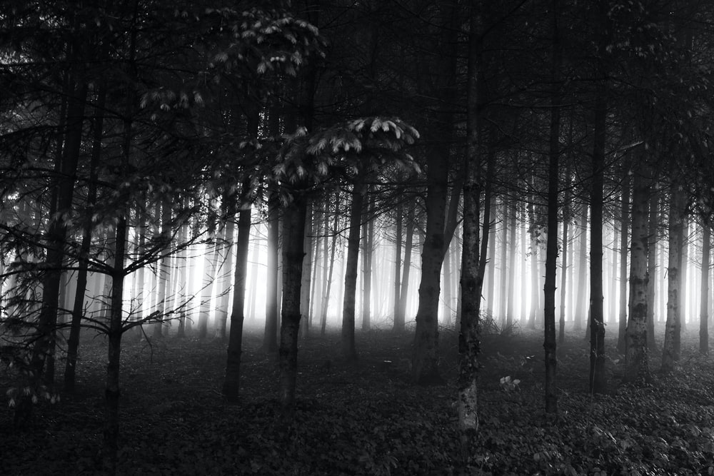 grayscale photo of trees in forest