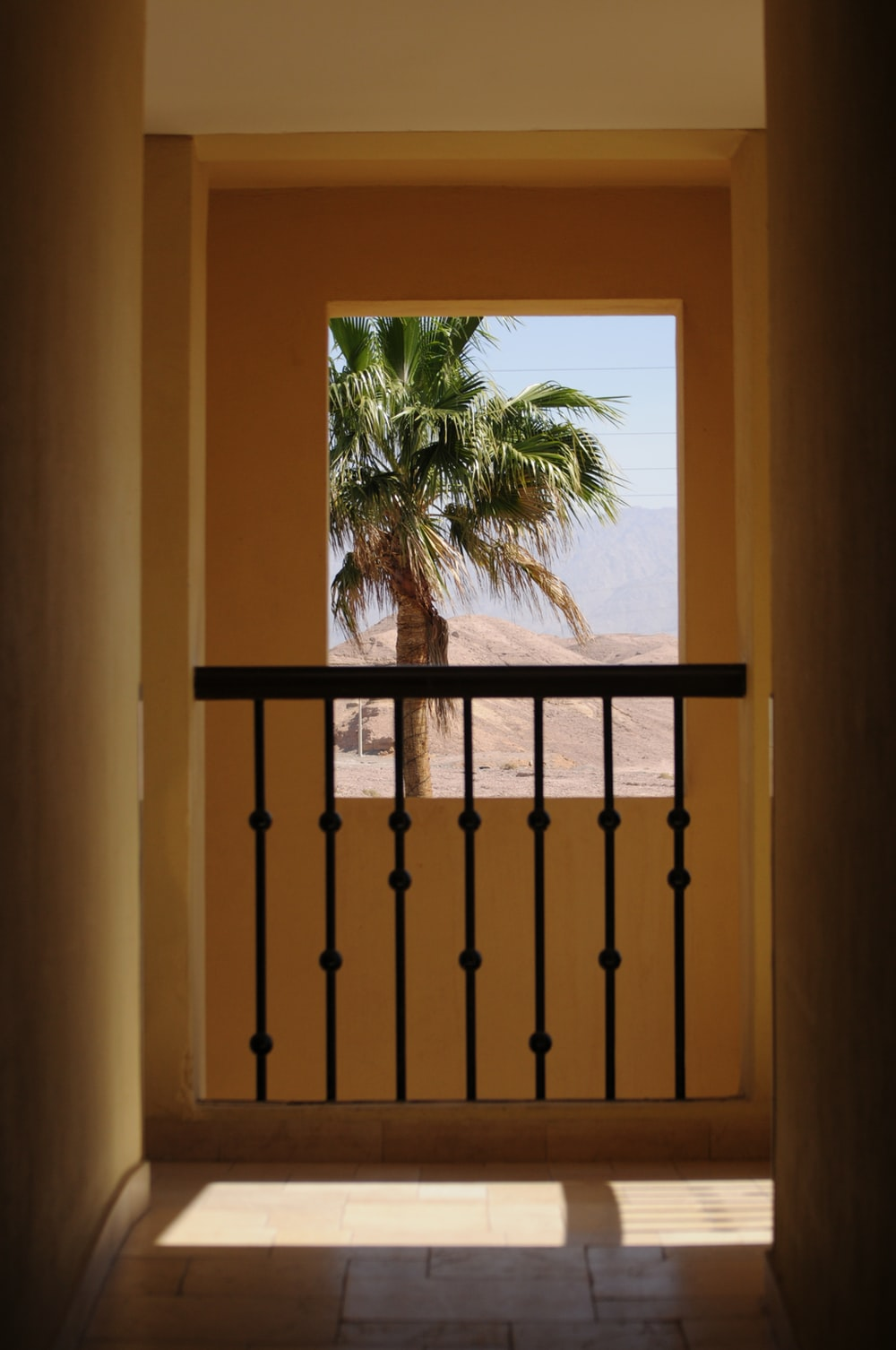 green palm tree near brown wooden fence